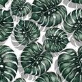 Jungle monstera leaf seamless pattern