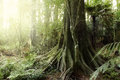Jungle new zealand tropical forest Royalty Free Stock Images