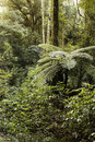 Jungle new zealand tropical forest Stock Images