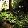 Jungle new zealand tropical forest Royalty Free Stock Photos