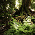 Jungle new zealand tropical forest Royalty Free Stock Photo