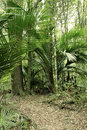 Jungle new zealand tropical forest Stock Photo