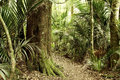 Jungle new zealand tropical forest Royalty Free Stock Photography