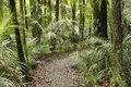 Jungle new zealand tropical forest Royalty Free Stock Image