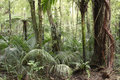 Jungle new zealand tropical forest Stock Photography