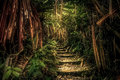 Jungle path in Sumatra Royalty Free Stock Photo