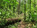 Sunny Jungle tropical rainforest in Central America Royalty Free Stock Photo