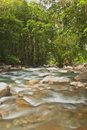Jungle River Royalty Free Stock Image