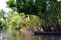 Jungle river. Ben Tre. Mekong delta region. Vietnam Royalty Free Stock Photo