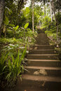 Jungle steps Royalty Free Stock Photo
