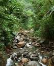 Jungle stream scenery including a small seen on a caribbean island named guadeloupe Stock Photography