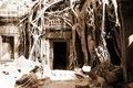 The jungle that surround of Angkor Wat Royalty Free Stock Image
