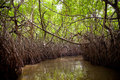 Jungle Swamp Royalty Free Stock Photo