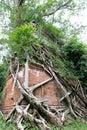Jungle Temple in Cambodia