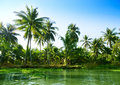 Jungle of Thailand Royalty Free Stock Photo