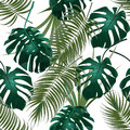 Jungle thickets of tropical palm leaves and monstera. Seamless floral pattern. Isolated on a white background