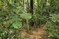 Jungle trail, Brazil Royalty Free Stock Photo