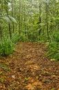 Jungle trail, Costa Rica Royalty Free Stock Photo