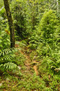 Jungle trail, Costa Rica Royalty Free Stock Photo