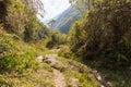 Jungle trail mountains, El Choro trek, Bolivia. Royalty Free Stock Photo