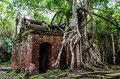 Jungle tree roots and ruined machinery Stock Images
