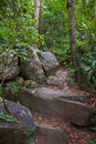 Jungle trek in asia path on koh rong cambodia Stock Images