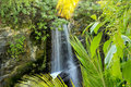 Jungle waterfall in a tropical Royalty Free Stock Photos