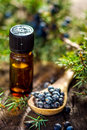 Juniper berries and essential oil Royalty Free Stock Photo