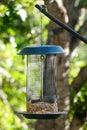 Juniper titmouse, Baeolophus ridgwayi, and bird table