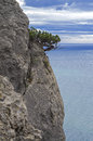 Juniper tree on a cliff above the sea crimea black coast Royalty Free Stock Photography