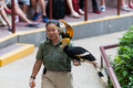 Jurong bird show singapore december a female trainer shows a rhinoceros hornbill buceros rhinoceros to an audience at the park on Stock Photography