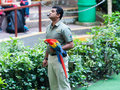 Jurong bird show singapore december a male trainer shows a scarlet macaw to the audience on december in singapore Royalty Free Stock Image