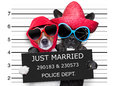 Just married mugshot two dogs and together in a picture Royalty Free Stock Photography