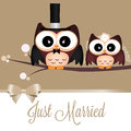 Just married two cute owls on special background Royalty Free Stock Images