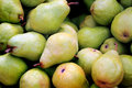 Just picked a bushel of fresh green d anjou pears Royalty Free Stock Photo