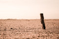 Just a stick in desert Royalty Free Stock Photos