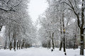Kaarli boulevard tallinn estonia old trees alley during a snowfall Royalty Free Stock Photo