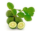 Kaffir Lime with leaves Royalty Free Stock Images