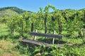 Kaiserstuhl Wine Region,Black Forest,Germany Royalty Free Stock Photo