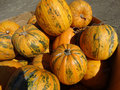 Kakai pumpkin, Cucurbita pepo Royalty Free Stock Photo