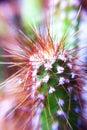 Kaktusowa roślina w ogródzie Zdjęcie Stock