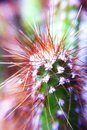 Kaktusväxt i trädgård Arkivfoto