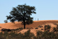 Kalahari farm scene, South Africa Stock Photo
