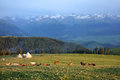 Kalajun grassland with snow mountain in summer located xinjiang china Stock Photo