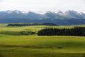 Kalajun grassland with snow mountains in summer located xinjiang china Stock Images