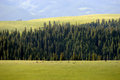Kalajun grassland in summer located xinjiang china Royalty Free Stock Photo