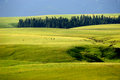 Kalajun grassland in summer located xinjiang china Stock Images