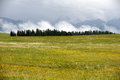 Kalajun grassland in summer located xinjiang china Stock Photography