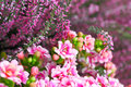 Kalanchoe and heather in pink with a blurred background Royalty Free Stock Photos