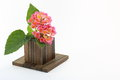 Kalanchoe and wood block photographed in a white back ground Royalty Free Stock Images